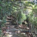 おしどりの池歩道