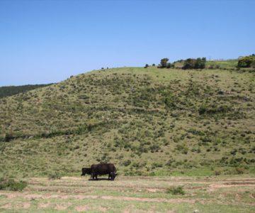 牧場の里あづま