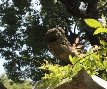 若宮神社 狛犬