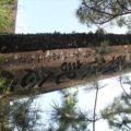 猛島神社 三大戦役記念碑
