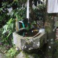 烏兎神社 手水鉢
