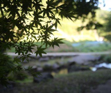渓流公園 青紅葉