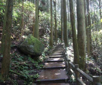 岩戸神社 参道