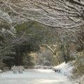 焼山園地溶岩観察広場 雪化粧